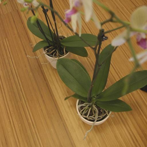 Parquet contrecollé Bambou Topbamboo Moso - 10 x 128 mm - Brossé - Verni - Caramel - Clipsable