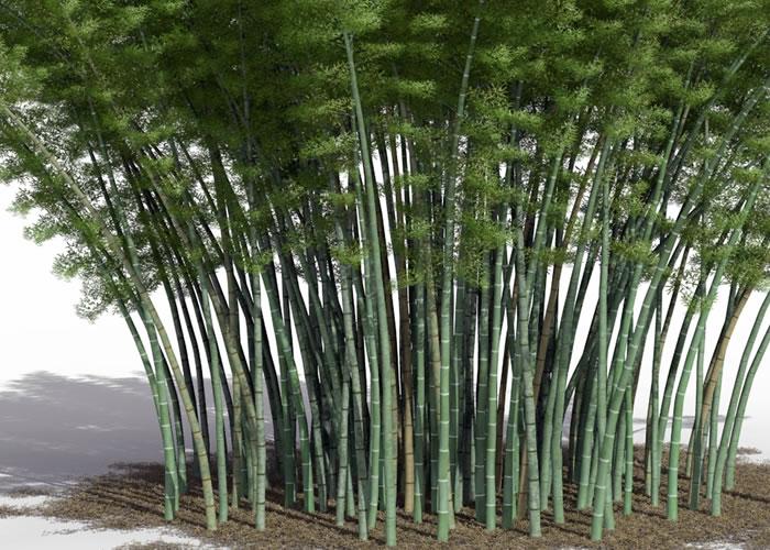 Parquet contrecollé Bambou Topbamboo Clic Moso - 10 x 128 mm - Verni - Caramel