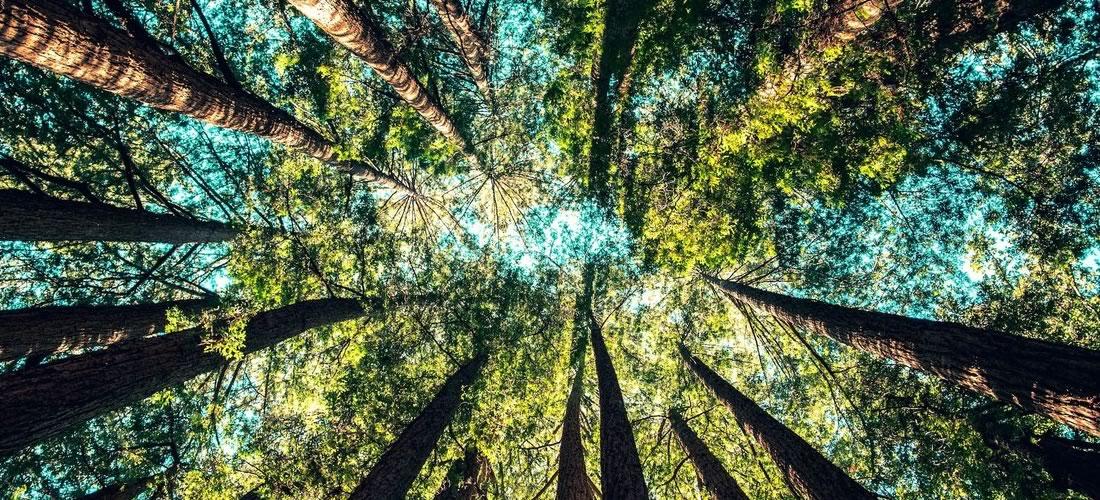 parquet tropical woods