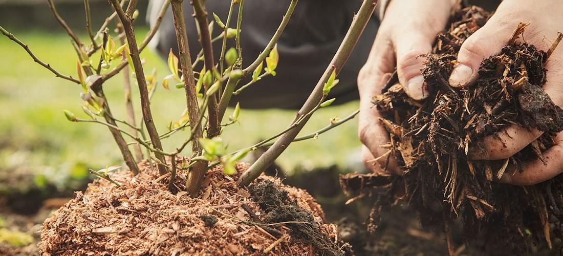 parquet achat écologie tropical woods