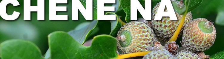 parquet chene nature