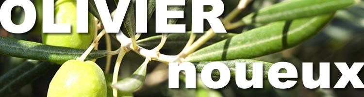 parquet en olivier avec noeuds