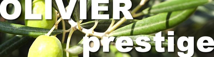 Parquet en olivier prestige