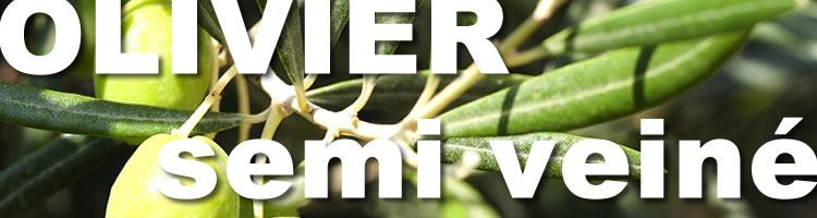 parquet olivier massif