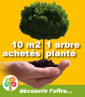 Topical Woods plante des arbres